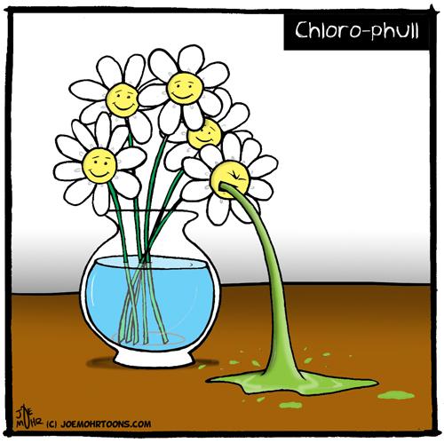 Chlorophull.